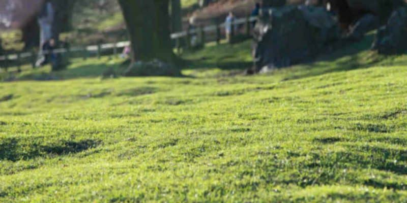 Fremragende Vertikalskærer (Plænelufter) test » Bedste maskiner til græsplænen AR35