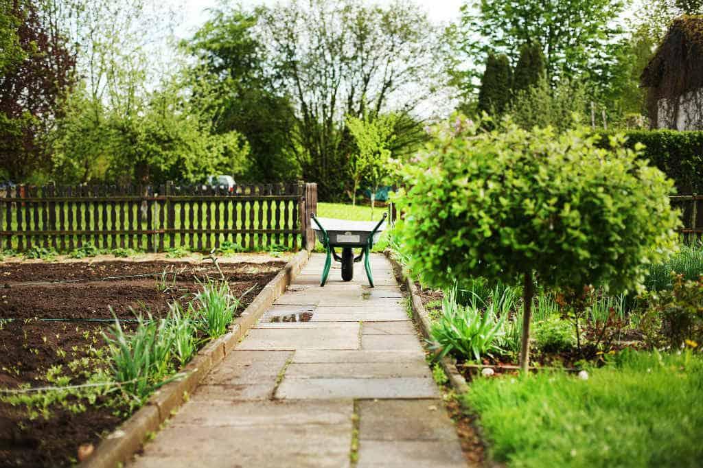 Plante nye træer (løvfældende) i haven
