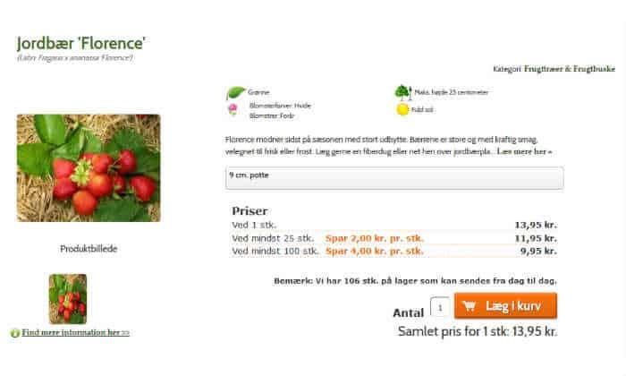 Køb Florence jordbærplante til haven