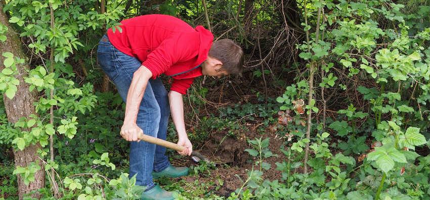 hvordan med plantning af træer med klump
