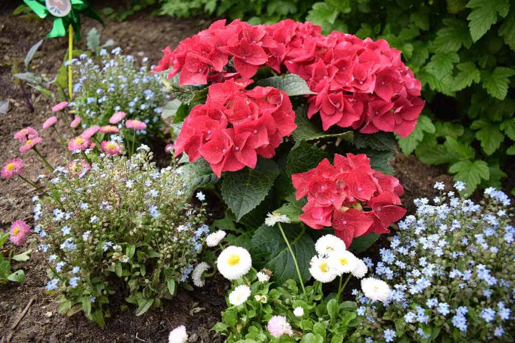 Plante i surbundsbed? Tips til hvordan og hvilken planter