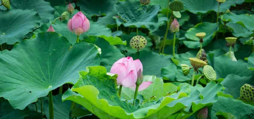 skab de flotte planter i dit havedesign