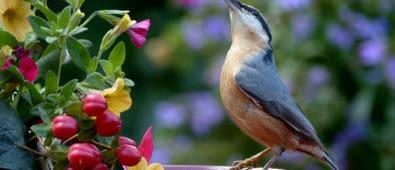 tips til design af haven