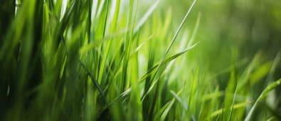 Hvordan får man den perfekte grønne græsplæne?