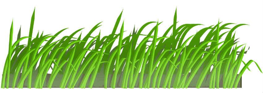 tag højde for mos ved anlæg af græsplæne