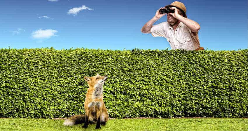 forebyg mod ræve i haven
