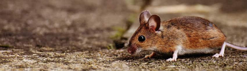 kom mus til livs i haven ved at forebygge
