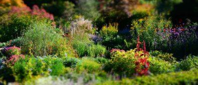 Plante staudebed – Sådan skaber du det smukke bed