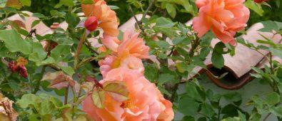 Havemur? Murer tips til have- eller læmur i haven