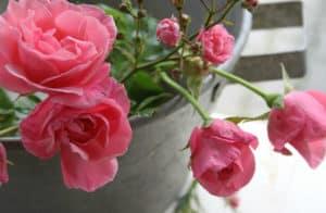 Zink, rust og blikarbejde i haven? Inspiration til hvad og hvordan
