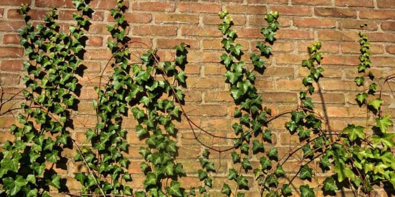Hvorfor du ikke kan undvære en murer til dit murerarbejde i haven?