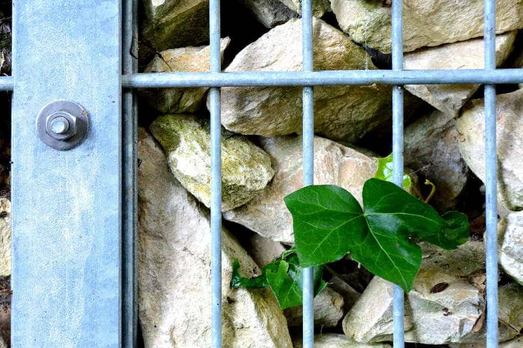 Hvad er en faskine og hvordan i forhold til kloakering?