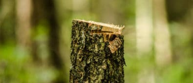 Hvordan fælder du et træ i haven