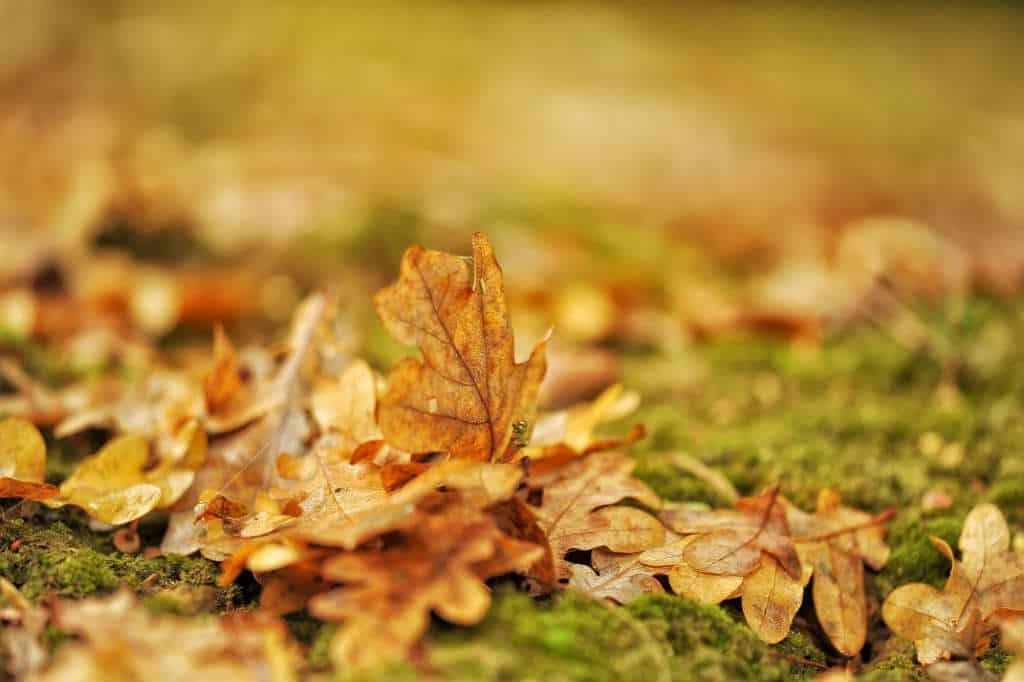 I hvilken rækkefølge forårs renoverer du din græsplæne?