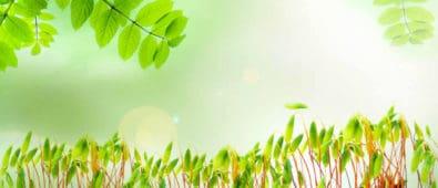 fjerne mos og give gødning i april måned