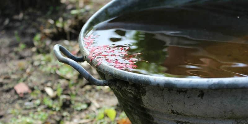 Hvad kan opsamlet regnvand bruges til?