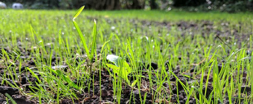 Hvordan du bruger plænedress i haven?
