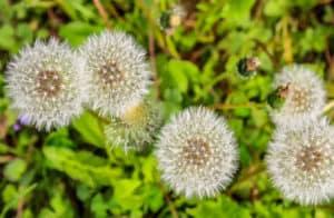 Hvordan fjerner du ukrudt i haven? Tips til den (håbløse?) kamp