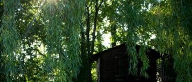 Gode sommerprojekter til haven